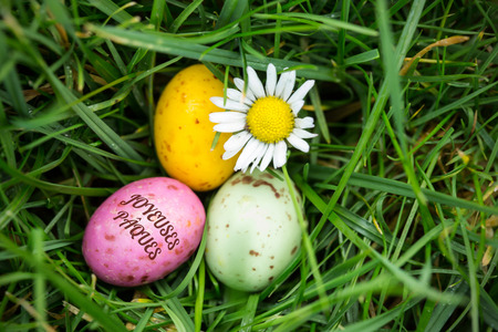 nestled: joyeuses paques against small easter eggs nestled in the grass with a daisy