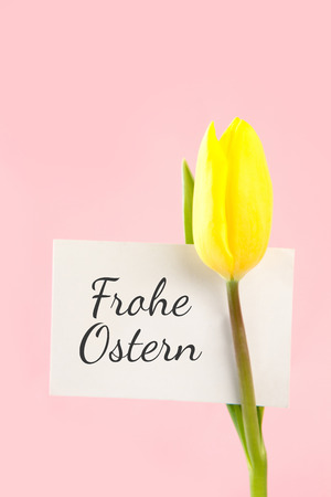 Ostern: frohe ostern against tulip with card Stock Photo