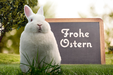 frohe: Easter bunny against frohe ostern