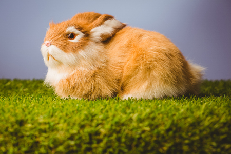 bunny rabbit: Ginger bunny rabbit on green grass