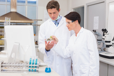 attentively: Scientists looking attentively at petri dish in laboratory