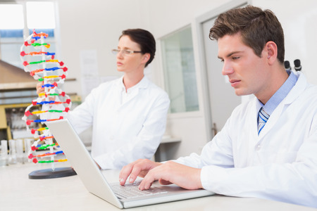 attentively: Scientist working attentively with laptop and another with dna model in laboratory Stock Photo