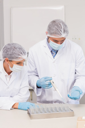 petri dish: Scientists working with petri dish in laboratory