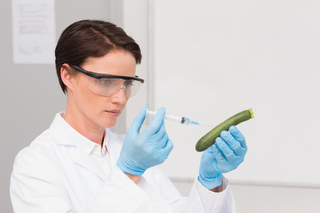 attentively: Scientist working attentively with courgette in laboratory Stock Photo
