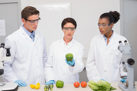 scientist: Scientists examining vegetables in laboratory