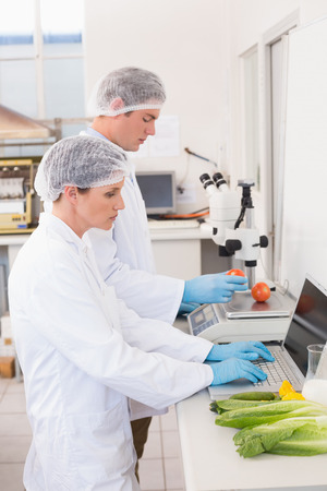 attentively: Scientists working attentively with vegetables in laboratory