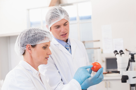 scientist man: Scientists examining attentively tomato in laboratory Stock Photo