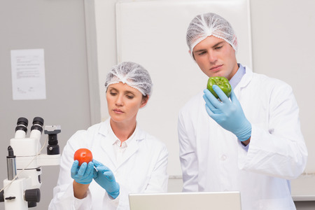attentively: Scientists examining attentively green pepper and tomato in laboratory