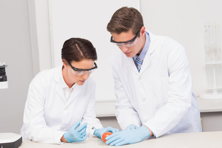 attentively: Scientists working attentively with tomato in laboratory