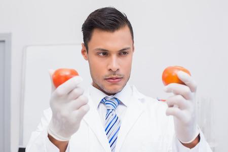 perplex: Perplex scientist holding two tomatoes in the laboratory