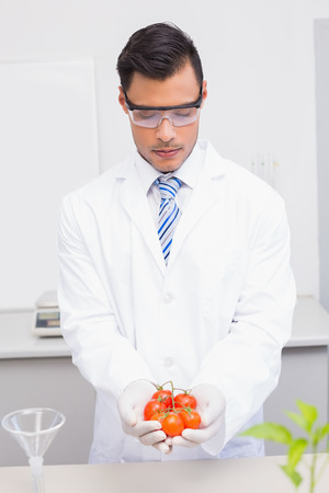 protective glasses: Scientist with protective glasses holding tomatoes in the laboratory Stock Photo