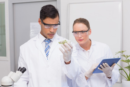 Scientists holding a petri dish with tests of plants in the laboratory Stock Photo