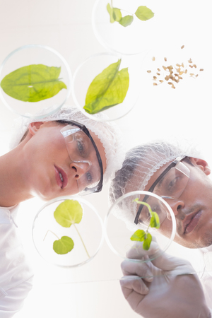 scientist: Scientists examining leafs in petri dish in the laboratory