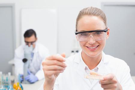 petri dish: Scientist examining petri dish in the laboratory