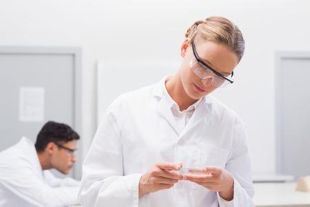 petri dish: Scientist examining petri dish in laboratory