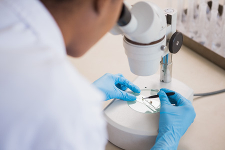 petri dish: Scientist examining petri dish under microscope in laboratory