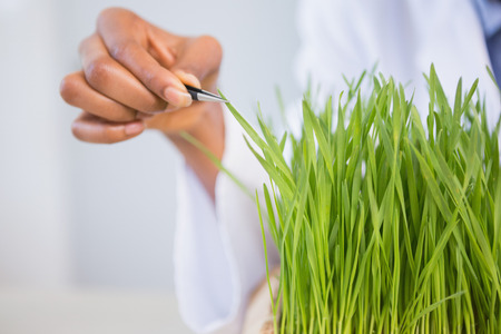 examining: Scientist examining sprouts in laboratory