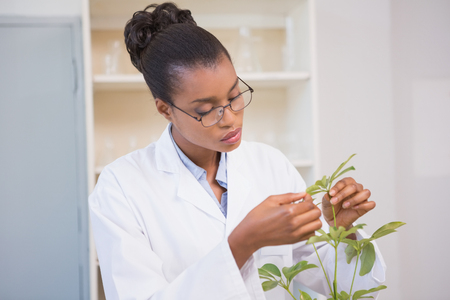 examining: Scientist examining plant in laboratory Stock Photo