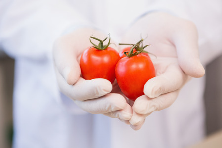 food safety: Food scientist showing tomatoes in laboratory