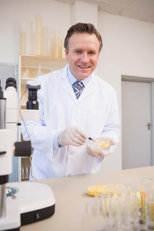 petri dish: Smiling scientist examining corn seeds in petri dish in laboratory Stock Photo