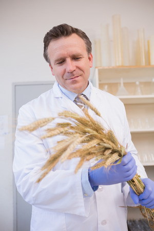 sheaf: Scientist holding sheaf in the laboratory Stock Photo