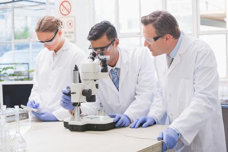 microscopio: Los cient�ficos que examinan algo con el microscopio en el laboratorio