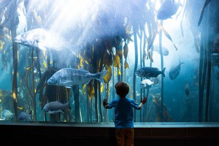 Young man touching a tank with big fish at the aquarium Stock Photo