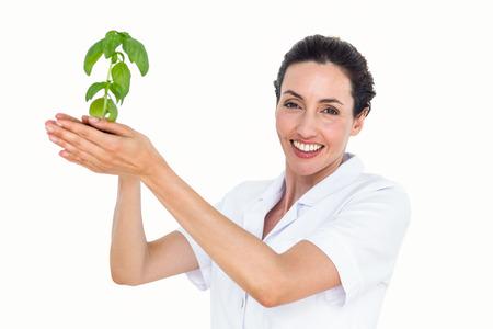 Scientist holding basil plant on white background Stock Photo