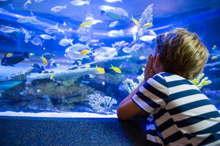 peces de acuario: Joven sentado en frente de una pecera en el acuario Foto de archivo