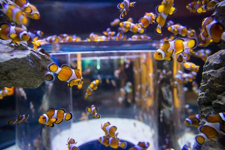 light circular: Fish swimming into a circular aquarium at the aquarium Stock Photo