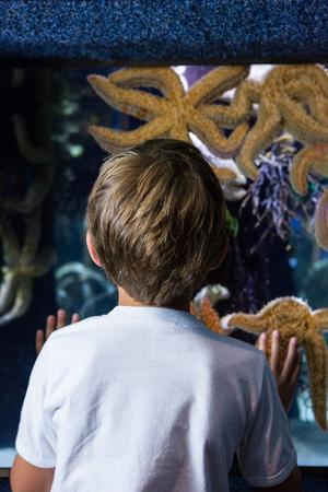big behind: Young man looking at big starfish behind the camera at the aquarium