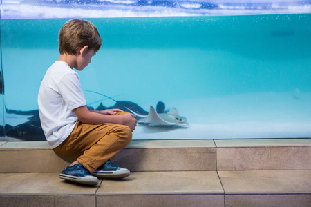Young man looking at manta ray in a tank at the aquarium photo