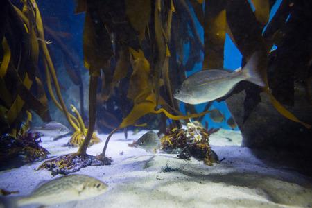 fishtank: Fish swimming in a tank with algae at the aquarium