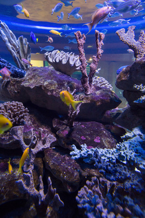 fishtank: Fish swimming in a tank with coral at the aquarium