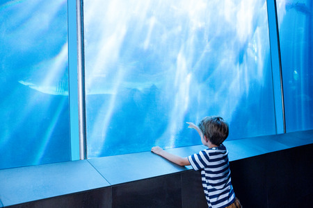 lonesomeness: Young man pointing a shark with his finger at the aquarium Stock Photo