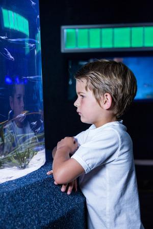 fishtank: young man looking at fish in tank at the aquarium