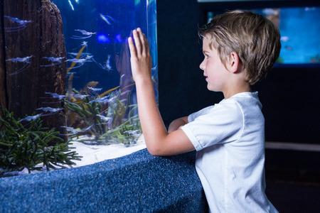 fishtank: Happy young man looking at fish in tank at the aquarium