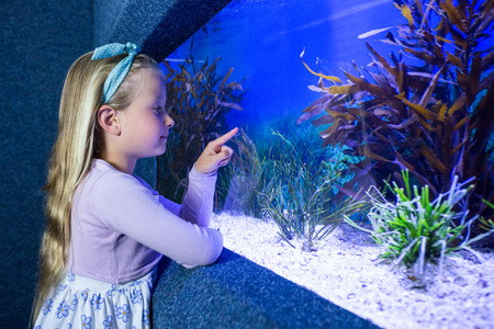 inquiring: Young woman pointing fish in tank at the aquarium