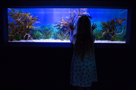 fishtank: Young woman touching a fish-tank behind the camera at the aquarium