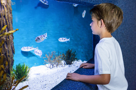 fishtank: young man looking at fish in tank at the aquarium