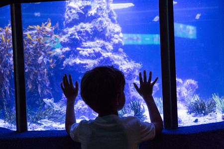 fishtank: Young man touching a fish-tank behind the camera at the aquarium Stock Photo