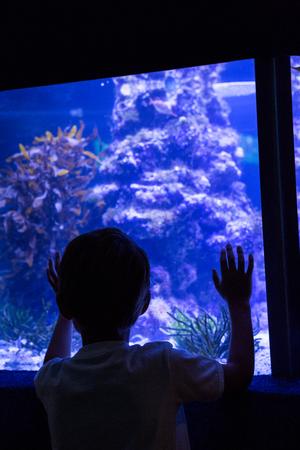 fishtank: Young man looking at fish behind the camera at the aquarium