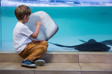 Young man pointing a manta ray in a tank at the aquarium photo