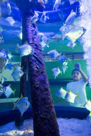 fishtank: Young man looking at fish in a tank at the aquarium