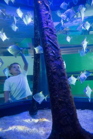 fishtank: Young man looking at fish in front of camera at the aquarium