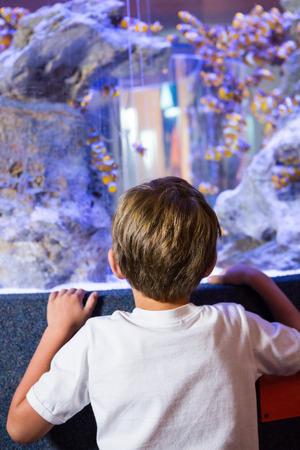 fishtank: Young man looking at a fish in a tank behind camera at the aquarium Stock Photo