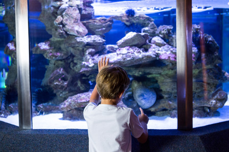 sea snake: Young man looking at sea snake in a tank at the aquarium