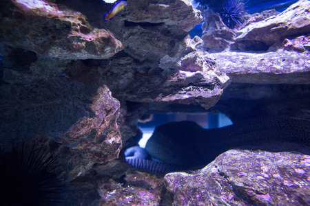 sea snake: Sea snake hiding into stones at the aquarium