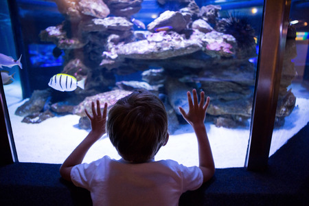 fishtank: Young man touching a fish-tank behind the camera Stock Photo