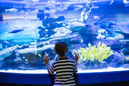 fishtank: Young man touching a fish-tank behind camera at the aquarium